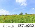 大阪・ハーベストの丘・夏・ひまわり 65710232