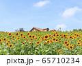 大阪・ハーベストの丘・夏・ひまわり 65710234