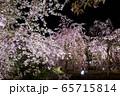 平安神宮 - 紅しだれコンサート  65715814