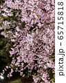 平安神宮 - 紅しだれコンサート  65715818