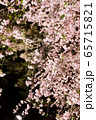 平安神宮 - 紅しだれコンサート  65715821