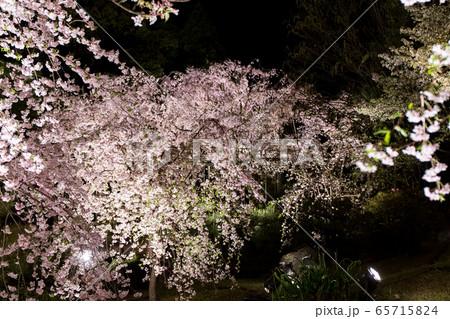 平安神宮 - 紅しだれコンサート  65715824