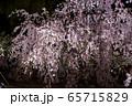 平安神宮 - 紅しだれコンサート  65715829