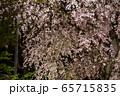 平安神宮 - 紅しだれコンサート  65715835