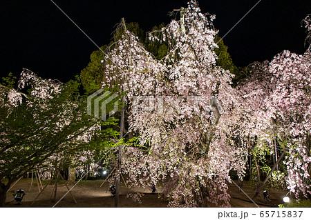 平安神宮 - 紅しだれコンサート  65715837