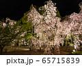 平安神宮 - 紅しだれコンサート  65715839