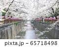 東京都 サクラの名所 目黒川の春 65718498
