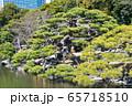 東京都 浜離宮恩賜庭園 黒松 燕の御茶屋の横 65718510