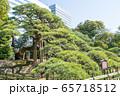 東京都 浜離宮恩賜庭園 三百年の松 65718512