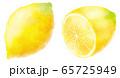 水彩タッチのレモン 65725949