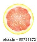 ピンクグレープフルーツの輪切り 水彩風 65726872