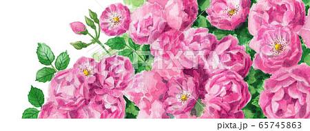 ブログ用ヘッダ画像ピンクのバラ 65745863