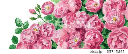 ブログ用ヘッダ画像ピンクのバラ 65745865