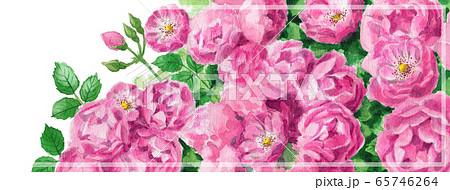 ブログ用ヘッダ画像ピンクのバラ 65746264