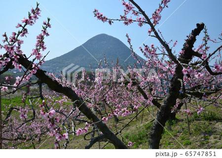 讃岐富士と桃園1(香川県丸亀市飯山町) 65747851