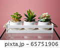 home plants in wooden box, abstract still life 65751906