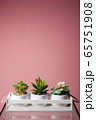 abstract still life. home plants in a box 65751908