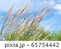 青空とススキの穂 / 北海道ニセコエリア 65754442