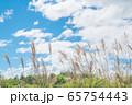 青空とススキの穂 / 北海道ニセコエリア 65754443