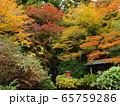 秋色に色付いた箱根神社 65759286