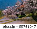 三多気の桜(三重県) 65761047