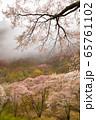 屏風岩公苑の桜(奈良県) 65761102