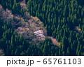 吉野杉の山腹に咲く一本桜(奈良県) 65761103