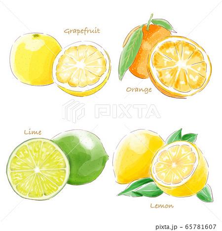 citrus_fruit_watercolor 65781607
