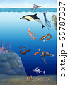 바다속 생물 세밀화 65787337