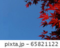 赤いもみじの背景 65821122