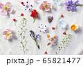 花 ランダム カラフル 65821477