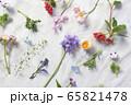 花 ランダム 背景 65821478