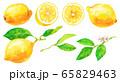 水彩レモン_素材 65829463