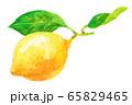 水彩レモン_枝つき 65829465