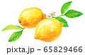 水彩レモン_2つ(花と葉つき) 65829466