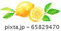 水彩レモン_1つと輪切り(葉つき) 65829470