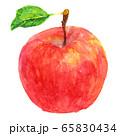 水彩リンゴ_葉つき 65830434