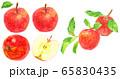 水彩リンゴ_素材 65830435