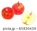 水彩リンゴ_2つと半分2 65830439