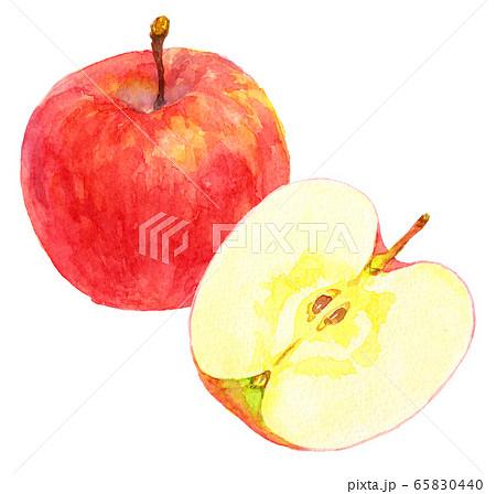 水彩リンゴ_1つと半分 65830440