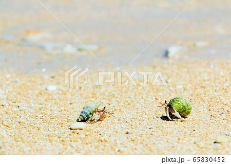 沖縄 波照間島 砂浜のヤドカリたち 65830452