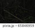 【夏イメージ】ヒメボタルの乱舞 65846959