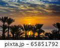 palms and sea on resort before sunrise 65851792