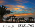 palms and sea on resort before sunrise 65851793