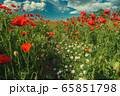 Field of poppy flowers and daisies 65851798