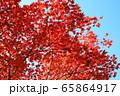 高野山 青空と参道の紅葉 65864917