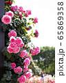 花 ピンク バラの花 65869358