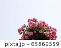 花びら 花 かわいい 65869359