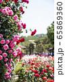 敵 バラの花 花 65869360