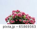 敵 バラの花 花 65869363